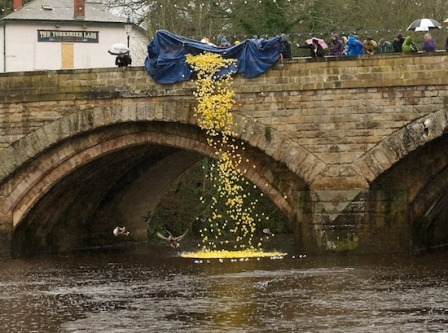 Knaresborough Duck Race 2012
